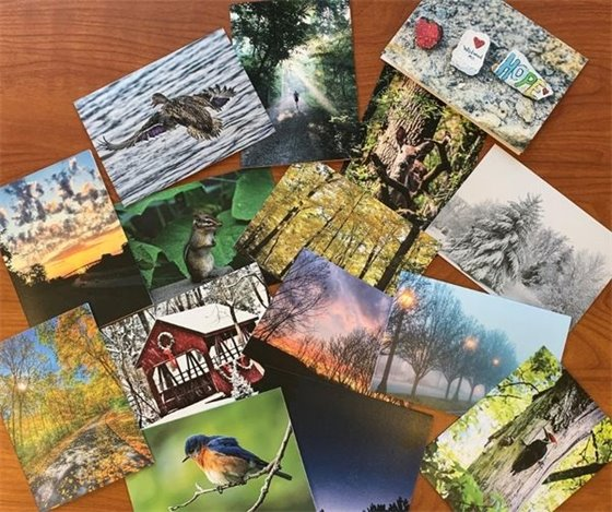 Wildwood Note Cards - For Sale