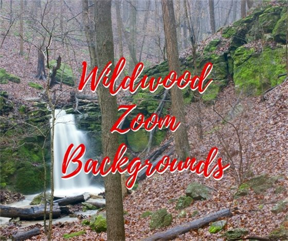 Not Just Any Ordinary Zoom Background - There Wildwood at its Best