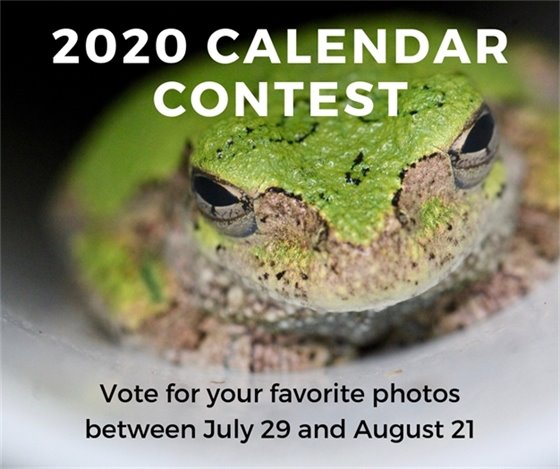 Please Vote! 2020 City of Wildwood Calendar Contest