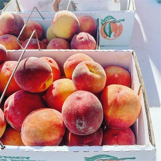 Produce, Vegetables, Meats, and all Other Kinds of Things - Wildwood Farmers Market