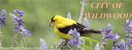 City of Wildwood - Nature Thrives Here!