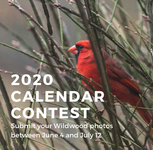 Calendar Contest Submittals - Spotlight