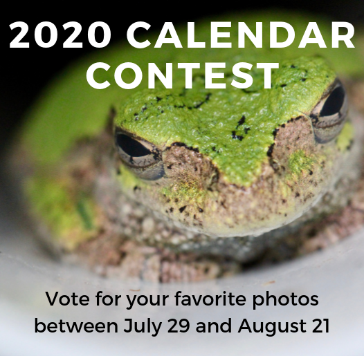 Calendar Contest Voting open with image of frog